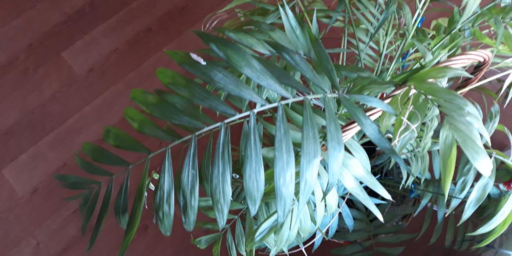 Planta que filtra el aire