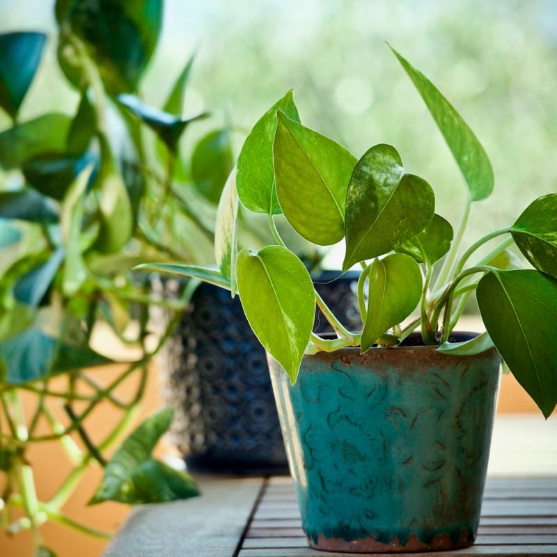 Cuáles son las mejores plantas purificadoras de aire