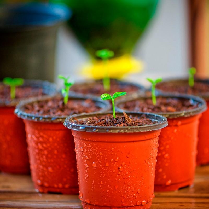 Qué súper plantas medicinales puedes cultivar en casa