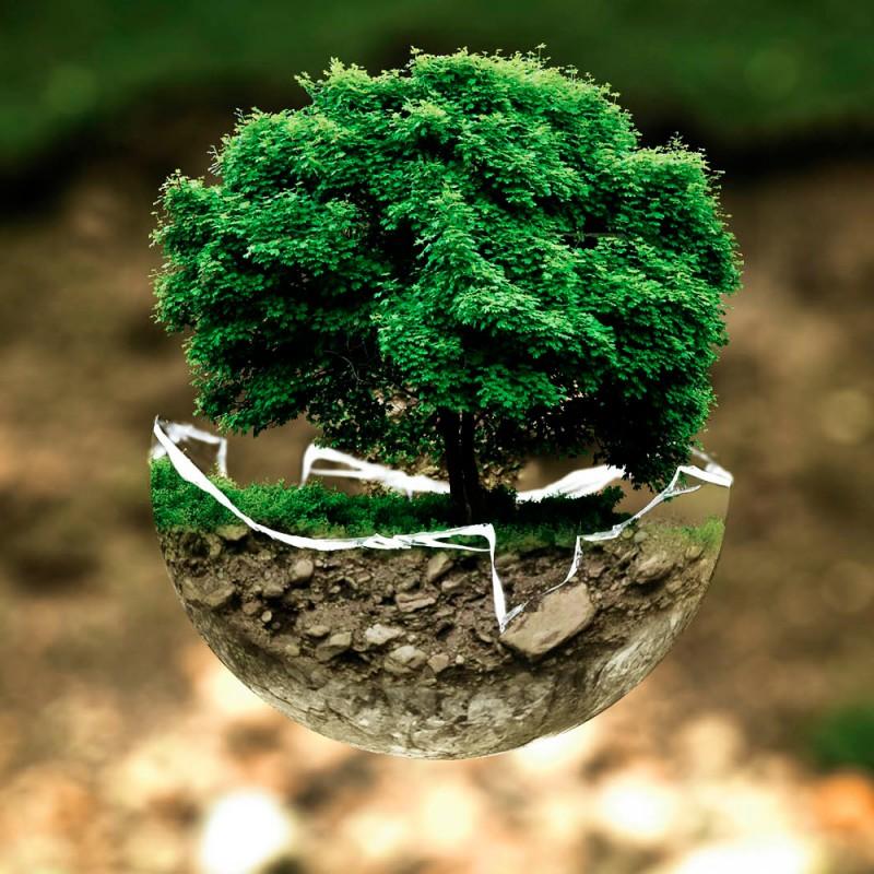 Curiosidades de las plantas. 25 hechos sorprendentes sobre las plantas