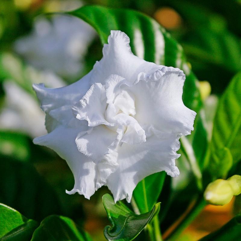 Qué plantas de interior aportan un agradable aroma al hogar