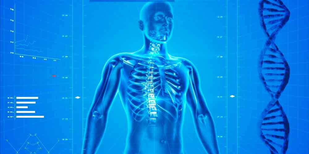 Preguntas del cuerpo humano