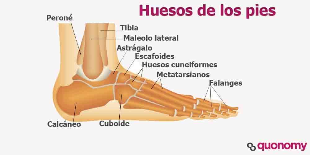 Nombre de los huesos de los pies