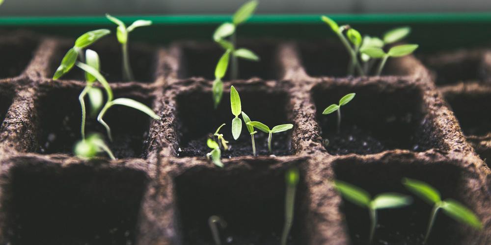 cultivar vegetales en casa