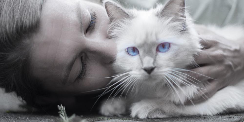Ronroneo de los gatos, por qué
