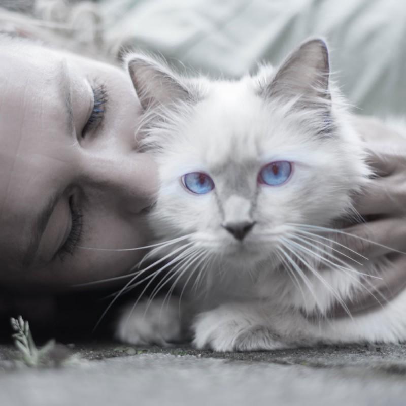 Por qué ronronean los gatos. La explicación científica