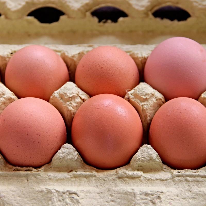 Dónde se deben guardar los huevos: ¿nevera o despensa?