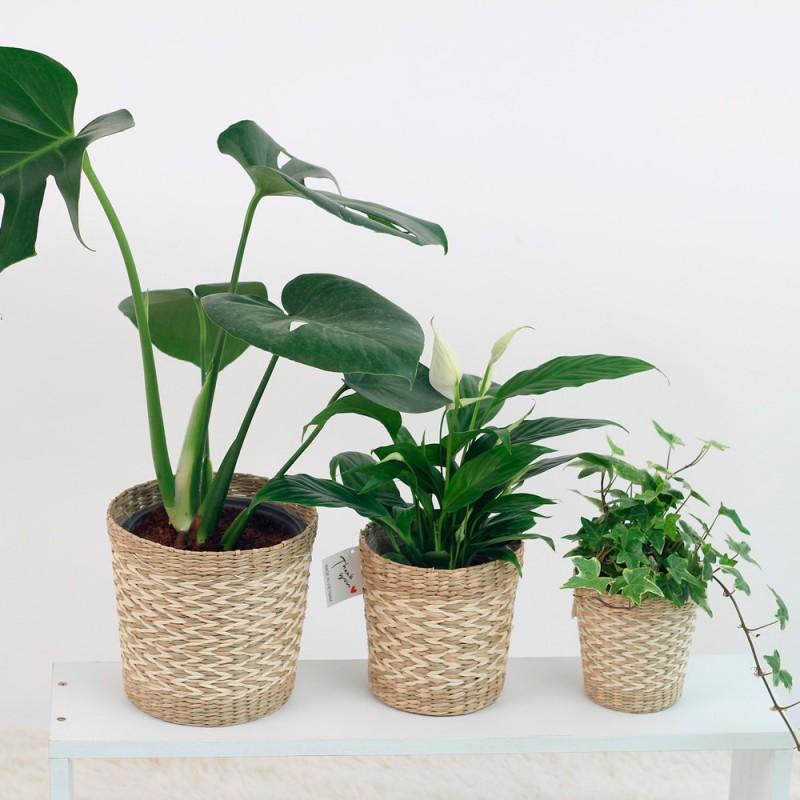 Cómo cuidar las plantas de interior si te vas de vacaciones