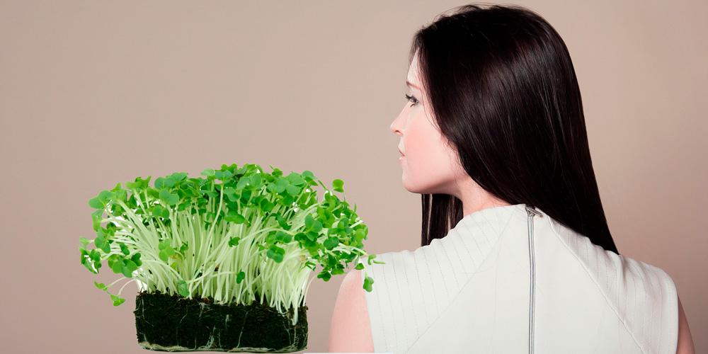 Plantas medicinales para fortalecer el cabello