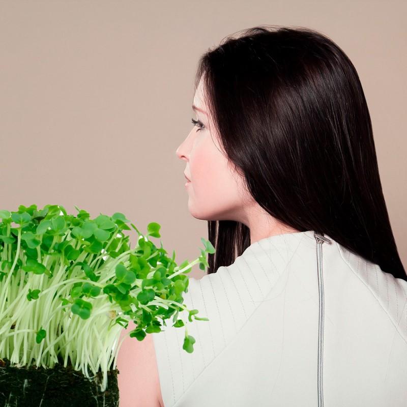 Qué plantas medicinales pueden fortalecer el cabello