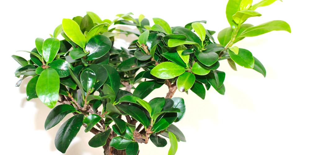 mi planta pierde su color verde