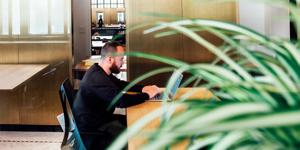 decorar con plantas la oficina