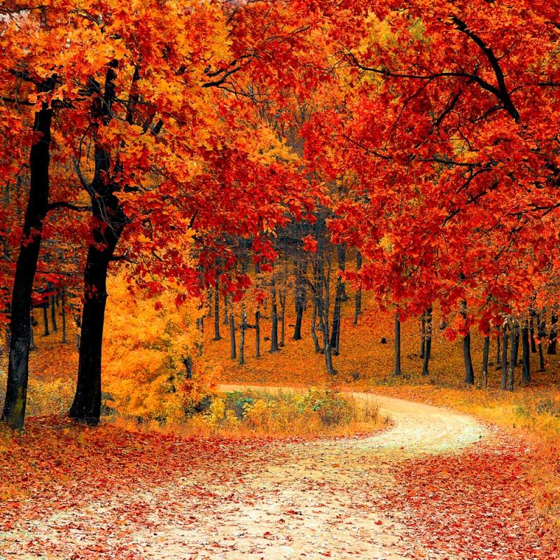 Como hacer las mejores fotografías del otoño