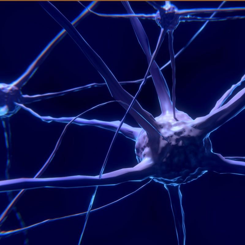 Serotonina: cómo actúa esta hormona sobre el cuerpo y el estado de ánimo