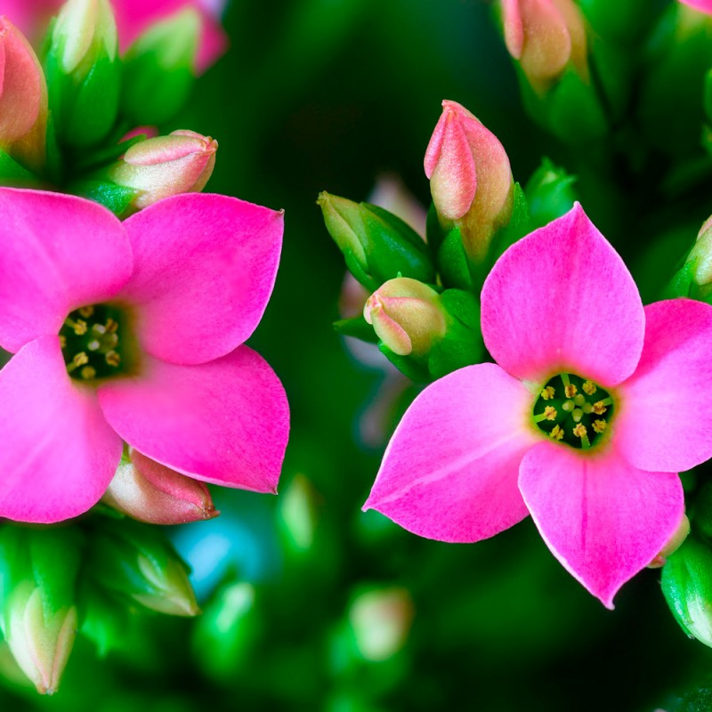 26 plantas de interior con flores para perfumar o decorar tu casa