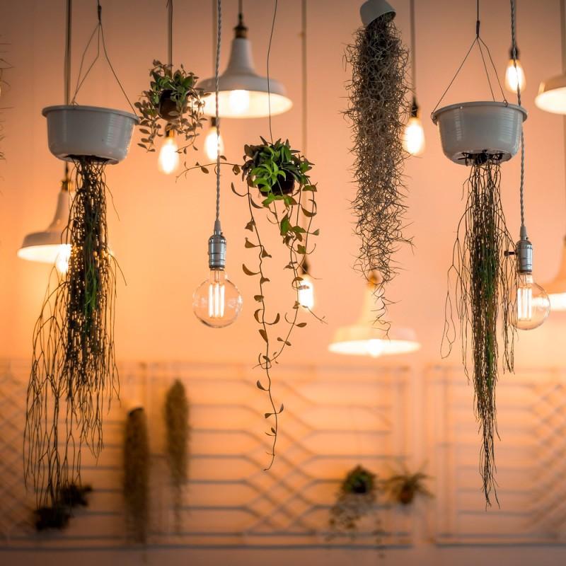 10 plantas de interior colgantes perfectas para decorar tu casa