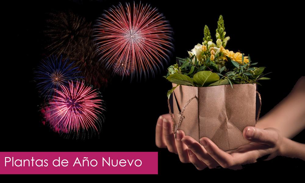 plantas de año nuevo