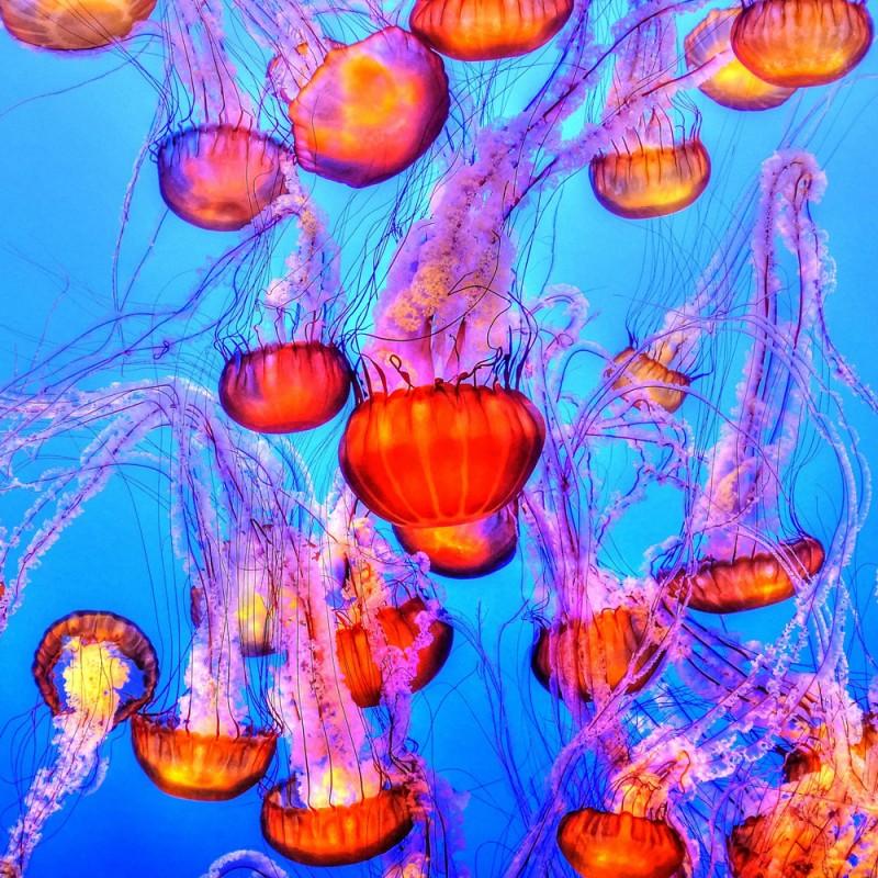 15 fascinantes curiosidades sobre las medusas