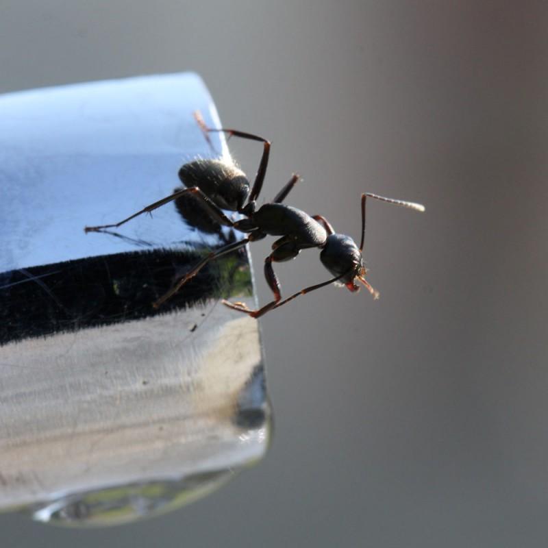 Remedios caseros contra las hormigas. 9 repelentes naturales para ahuyentar a estos insectos