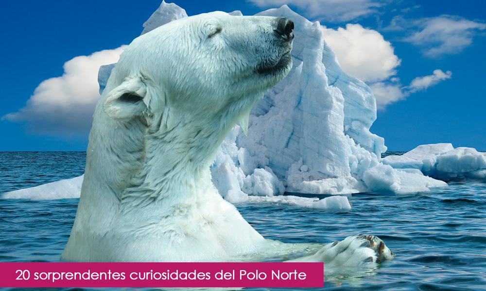 curiosidades del polo norte
