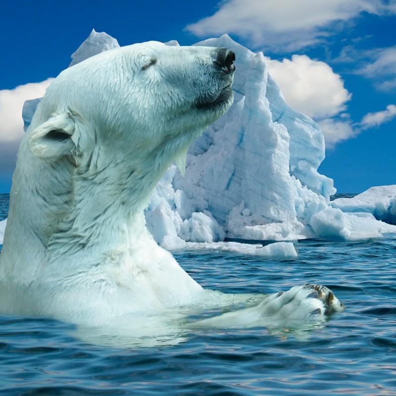20 fascinantes curiosidades del Polo Norte
