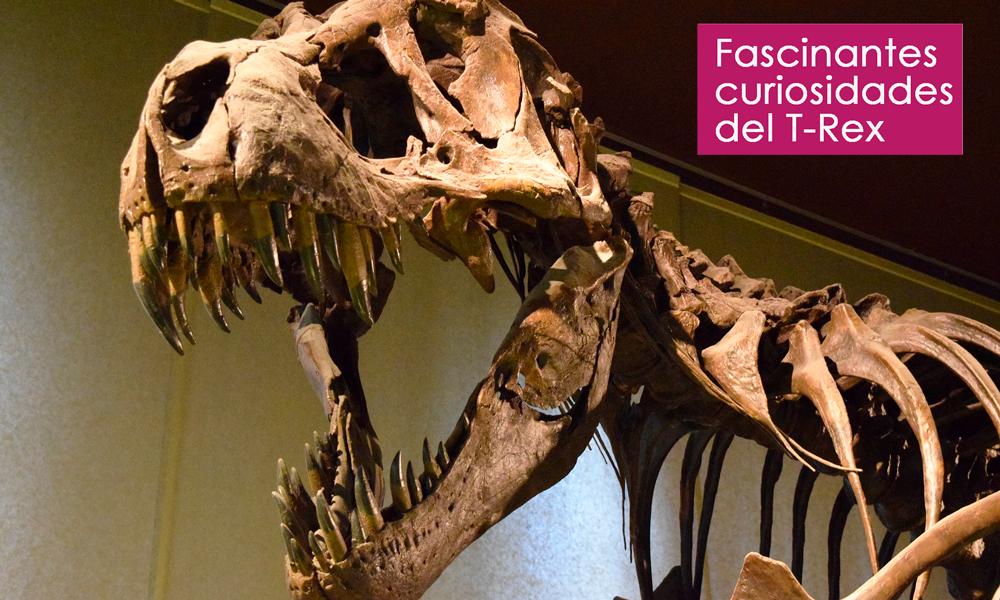 increíbles curiosidades del T-Rex que desconoces