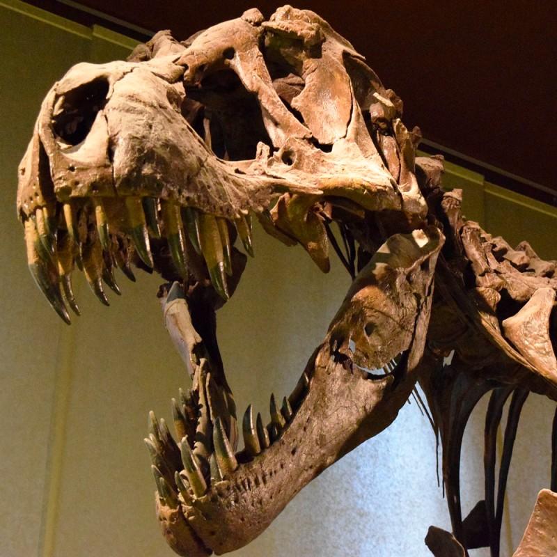 7 increíbles curiosidades del T-Rex que no conocías