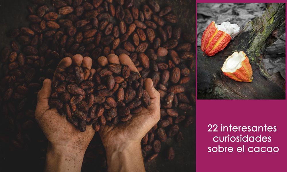 curiosidades del cacao
