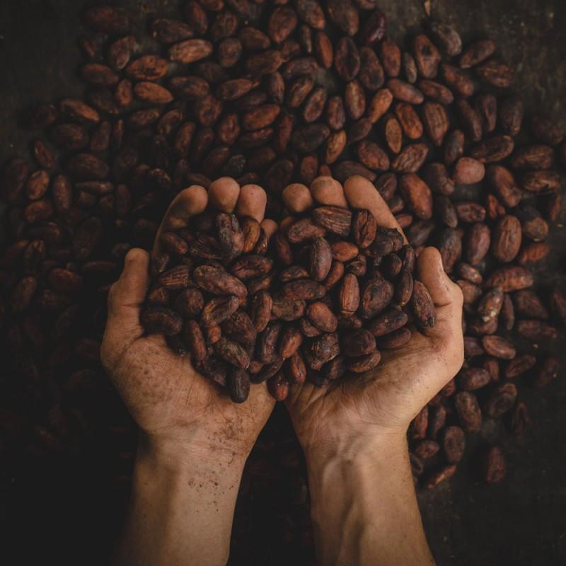 22 asombrosas curiosidades sobre el cacao que quizás no sabías