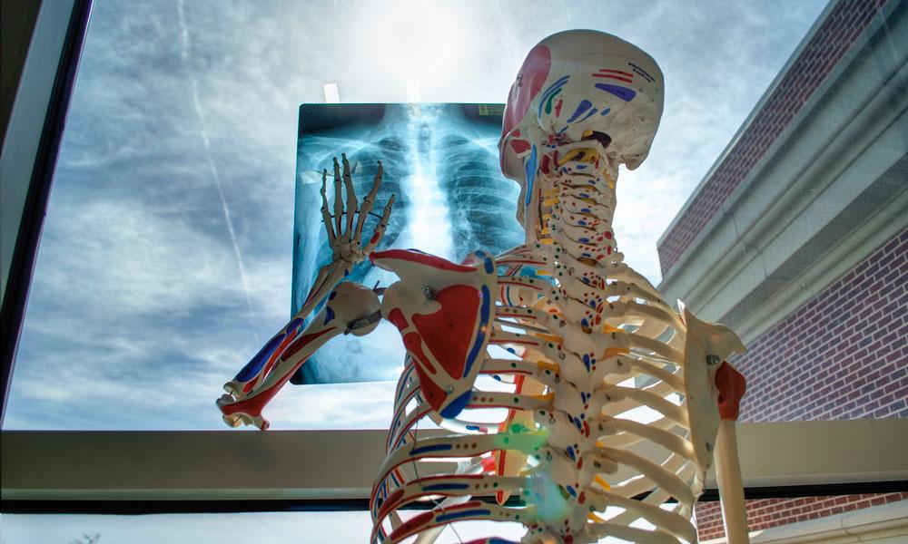 Curiosidades del esqueleto humano