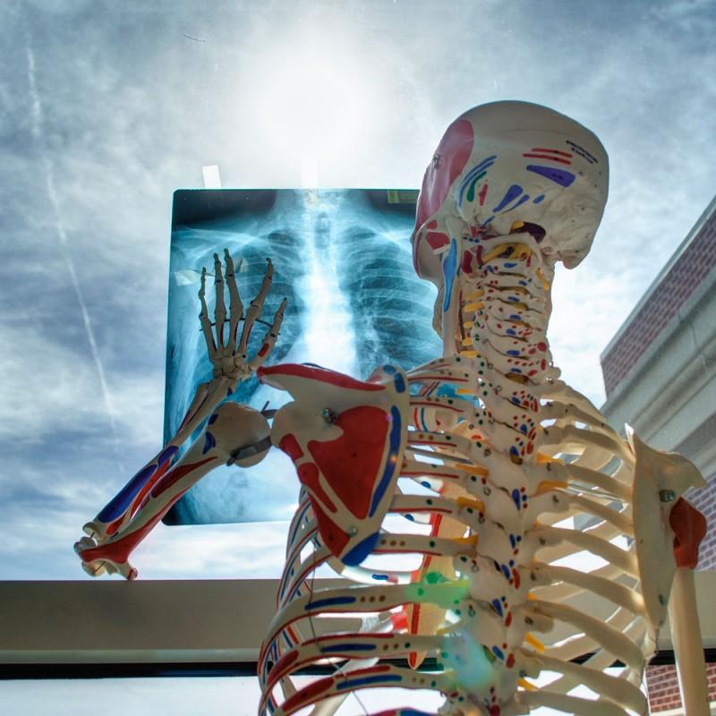 21 fascinantes curiosidades del esqueleto humano
