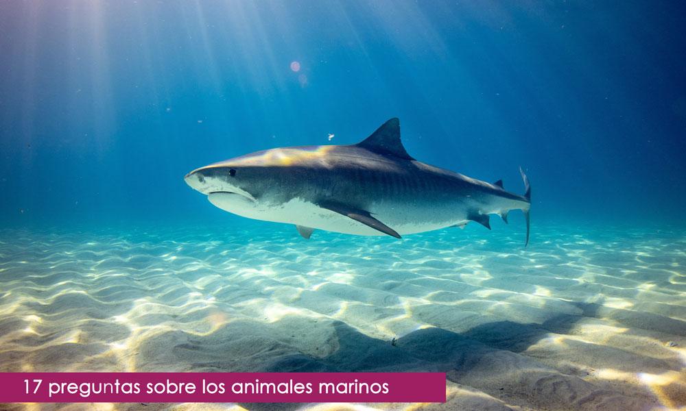 preguntas de test sobre animales marinos