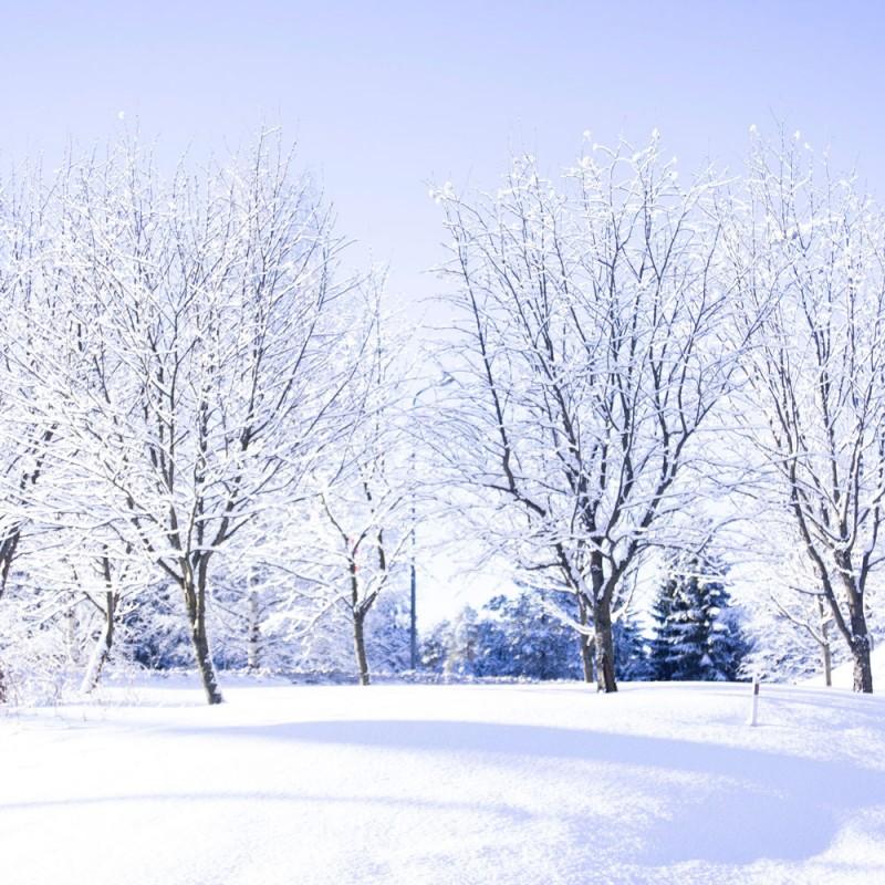 16 sorprendentes curiosidades sobre el invierno y el frío