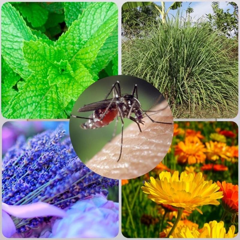Qué plantas repelen a los mosquitos de forma natural