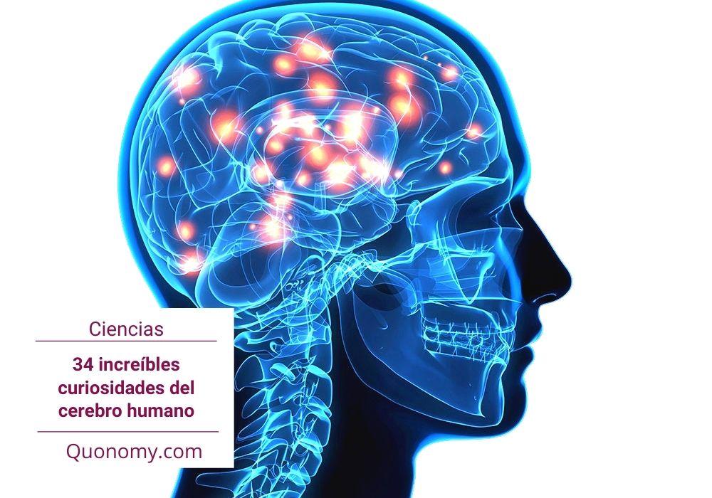 curiosidades del cerebro humano