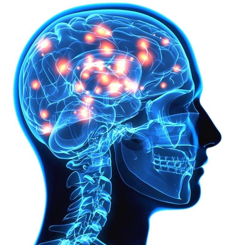 34 curiosidades del cerebro humano que te dejarán alucinado