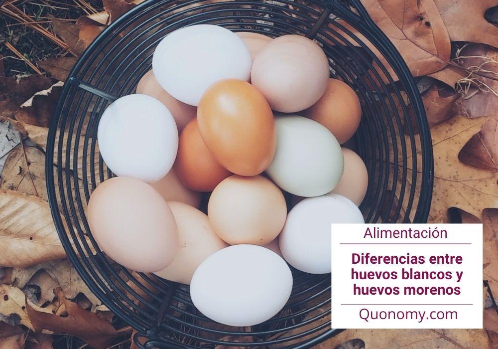 huevos blancos vs huevos morenos