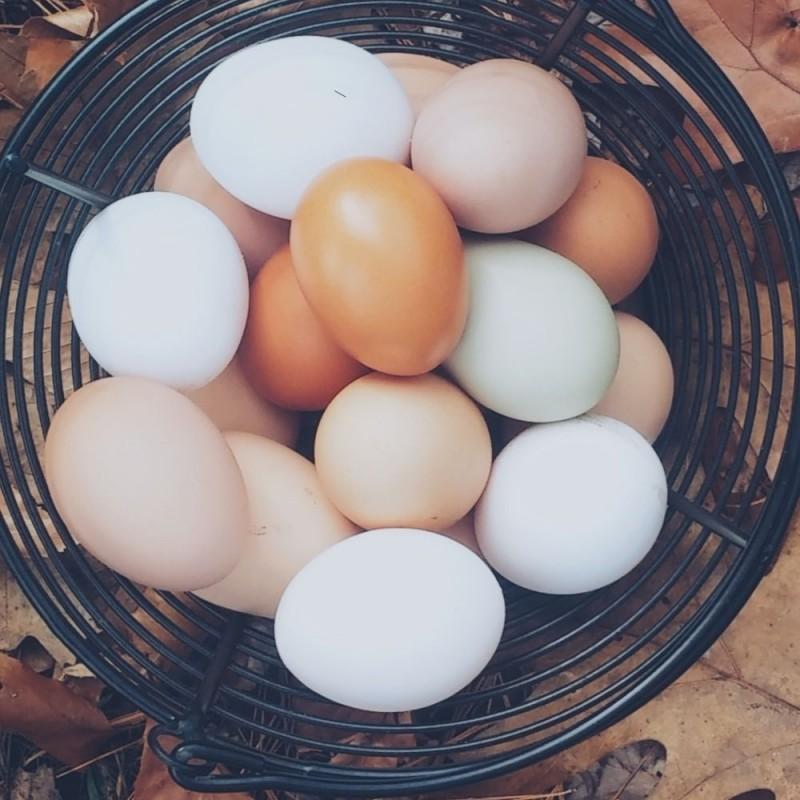 Huevos marrones vs huevos blancos, ¿cuál es la diferencia?
