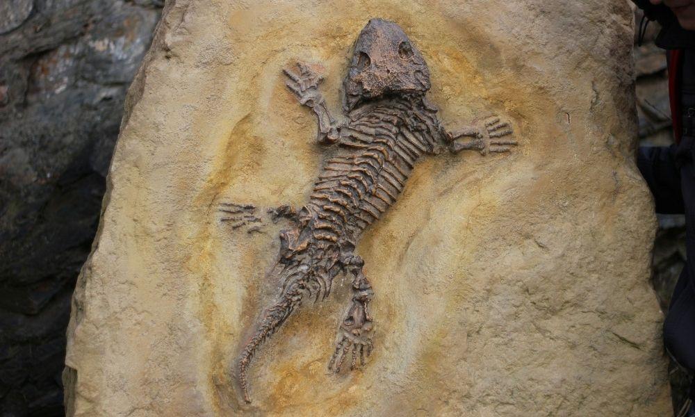 así se forma un fósil