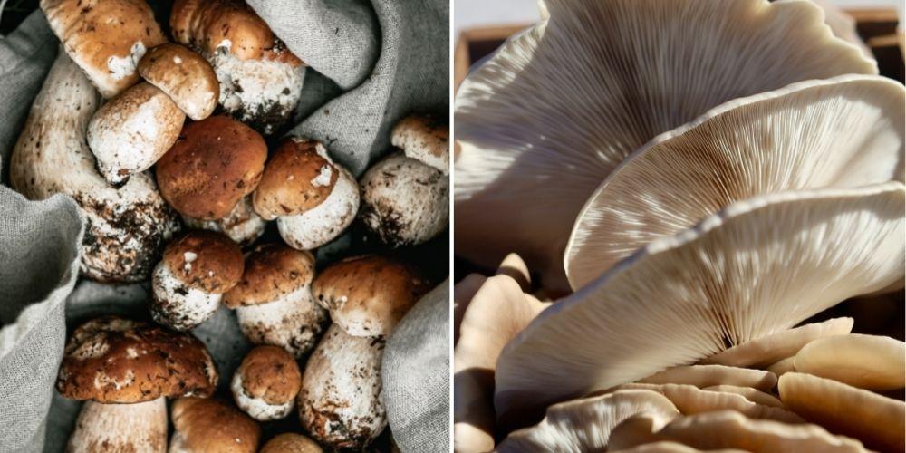 limpiar hongos correctamente