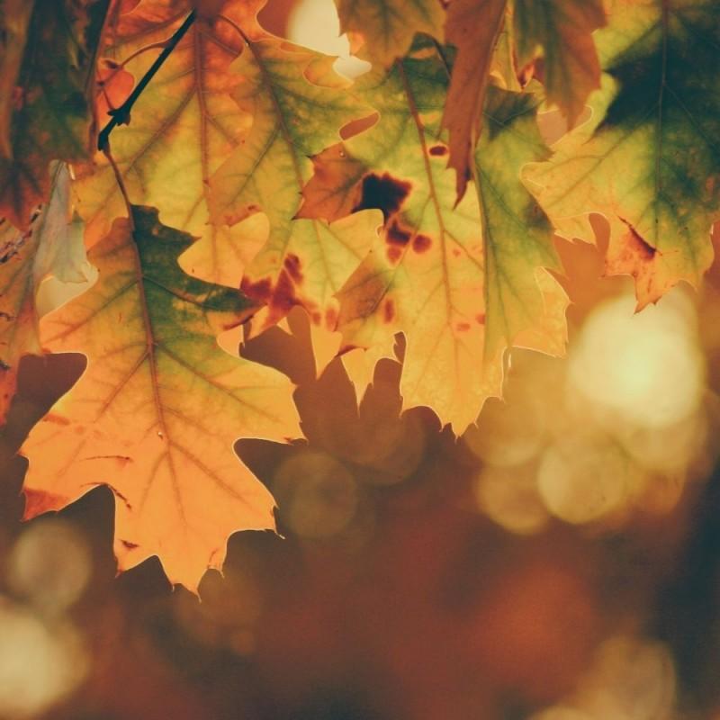 15 increíbles curiosidades del otoño que ni imaginabas
