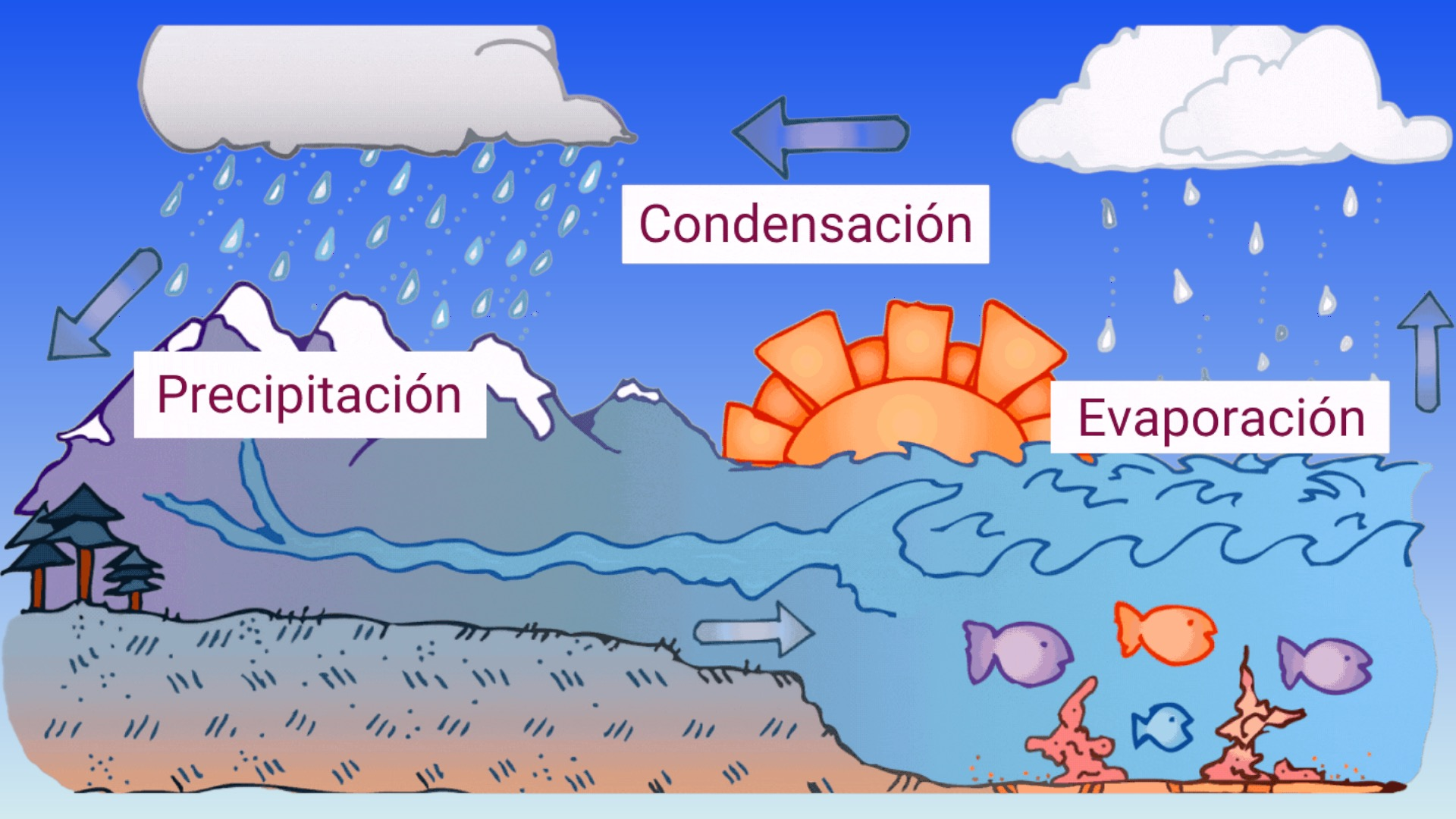 procesos del ciclo del agua