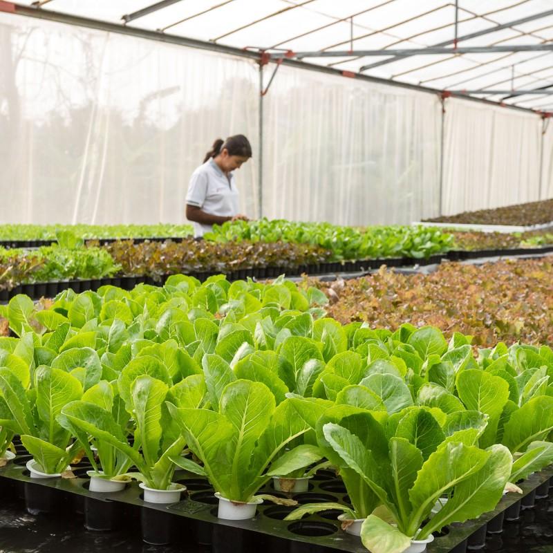 Qué es la hidroponía o cómo  cultivar sin tierra