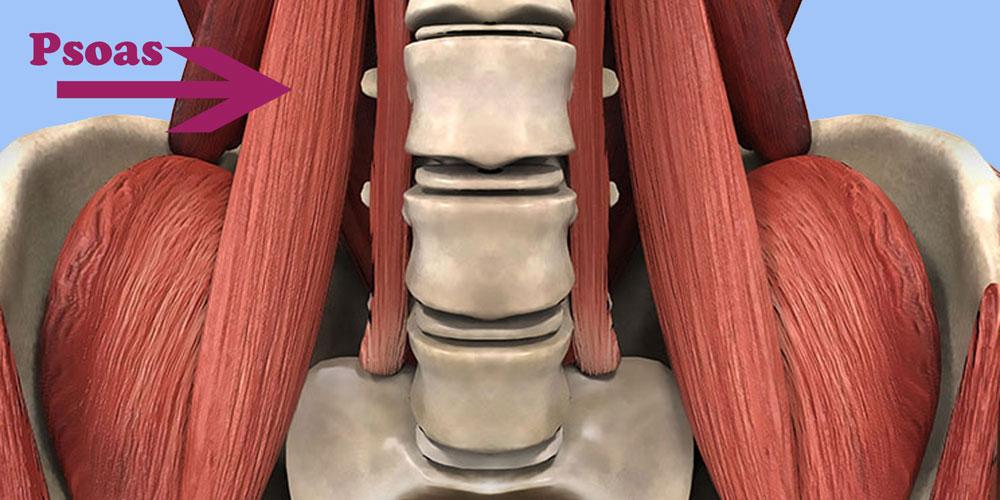 qué es el músculo psoas
