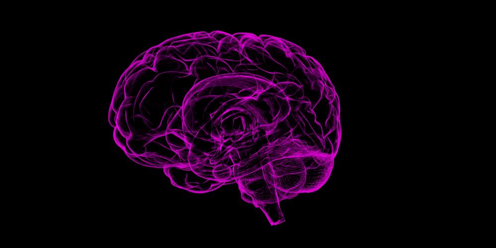 La relación entre el tamaño del cerebro y la inteligencia